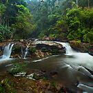 Flowing in the Jungle by Thomas Dawson