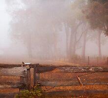 Frankland Fog by Eve Parry
