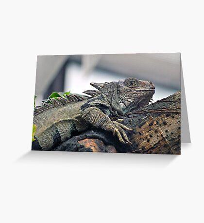 Iggy Greeting Card