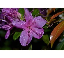 flower with raindrops Photographic Print