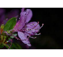april showers Photographic Print