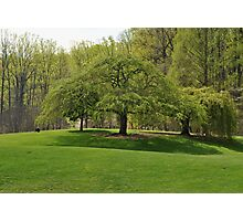 Weeping Willow at the Gardens Photographic Print