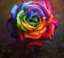 Rainbow Dream Rose by Lilyas