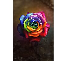 Rainbow Dream Rose Photographic Print