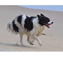 Beach Dog Photographic Print