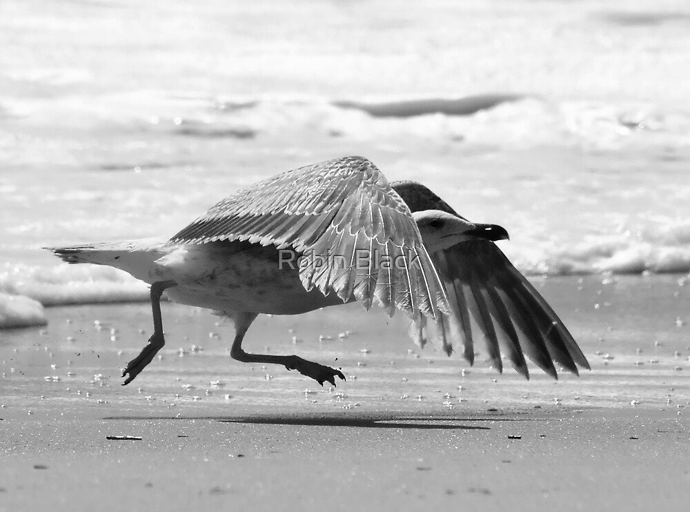 Liftoff! by Robin Lee