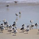 One-legged Shorebirds by Robin Black