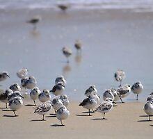One-legged Shorebirds by Robin Lee