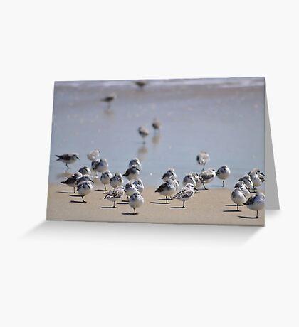 One-legged Shorebirds Greeting Card