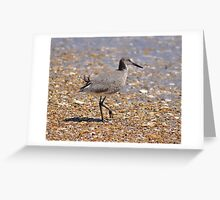 Outer Banks Willet Greeting Card