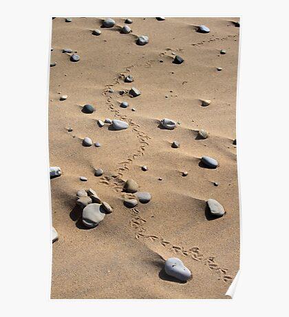 Bird Tracks & Rocks Poster