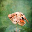 Flamingo II by KBritt