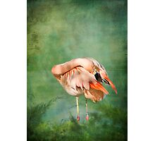 Flamingo II Photographic Print