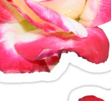 Red and cream rose Sticker