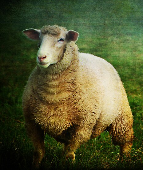There's nothing Sheepish about Me by Clare Colins