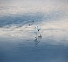 Two Royal Spoonbills in the Pale Lake by alycanon