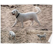 A Fluffy Coated White Dog at the Sandy Beach Collage Poster