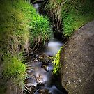 Spring Water Creek by vilaro Images