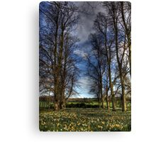 Daffs and Trees  Canvas Print