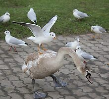 taxi for mr c.gull by justpete