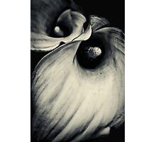 Dark & Dangerous... Photographic Print