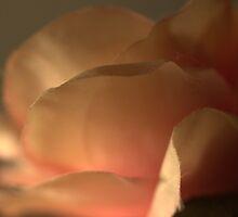 Rose by LamartDesigns