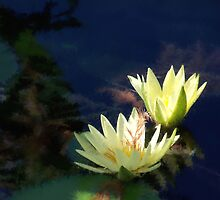 Lily Luminance by Brian Gaynor