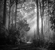 Toolangi State Forest 2  by Christine  Wilson Photography