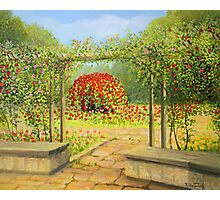 In The Rose Garden Photographic Print