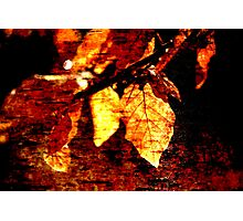 Leaf and Light Abstract Photographic Print