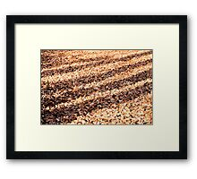 Shadows on the Leafy Woodland Floor Framed Print