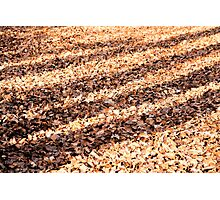 Shadows on the Leafy Woodland Floor Photographic Print