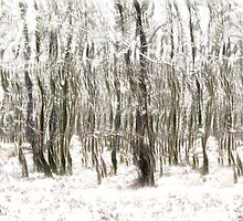 Trees in the Forest Abstract by Natalie Kinnear