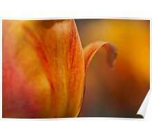 Tulip Bends Poster