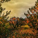 Fall Colors #24335 by Charles & Patricia   Harkins ~ Picture Oregon
