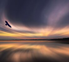 Golden Eagle Dawn by David Alexander Elder by David Alexander Elder