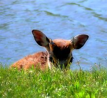 Little Shy One  ( Wild Life Preserve ) by Carla Jensen