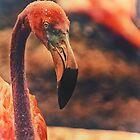 Flamingo by Karol Livote