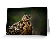 Lady Pheasant Greeting Card