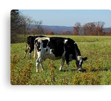 Grazing Cows Canvas Print