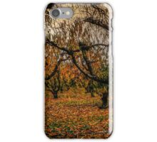 Fall Colors #7768 iPhone Case/Skin