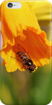 Hover Fly Trumpeting by John Dunbar