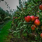 Appless #765 by Charles & Patricia   Harkins ~ Picture Oregon