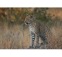 Young Leopard Photographic Print