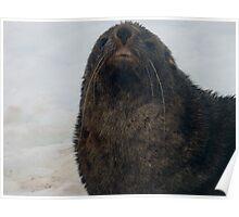Seal Life Poster