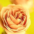 A rose by any other name is still a rose by jamesnortondslr
