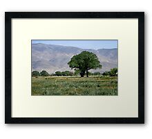 Trees Among The Wild Iris Framed Print