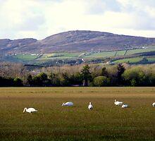 Wetlands Wild Geese by Fara