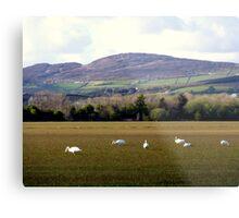 Wetlands Wild Geese Metal Print
