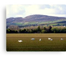 Wetlands Wild Geese Canvas Print